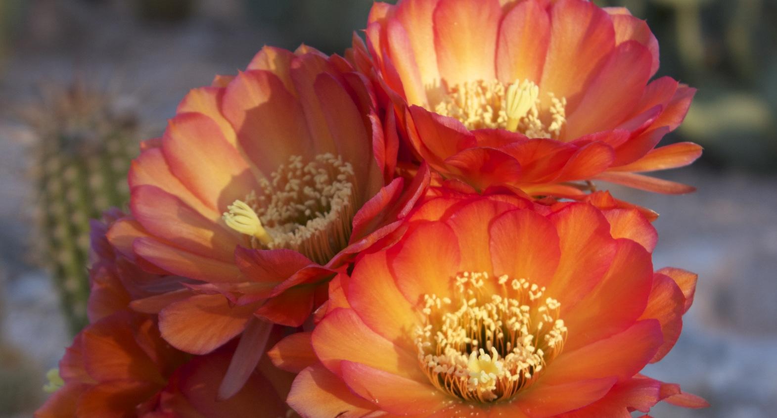 breast augmentation in Tucson