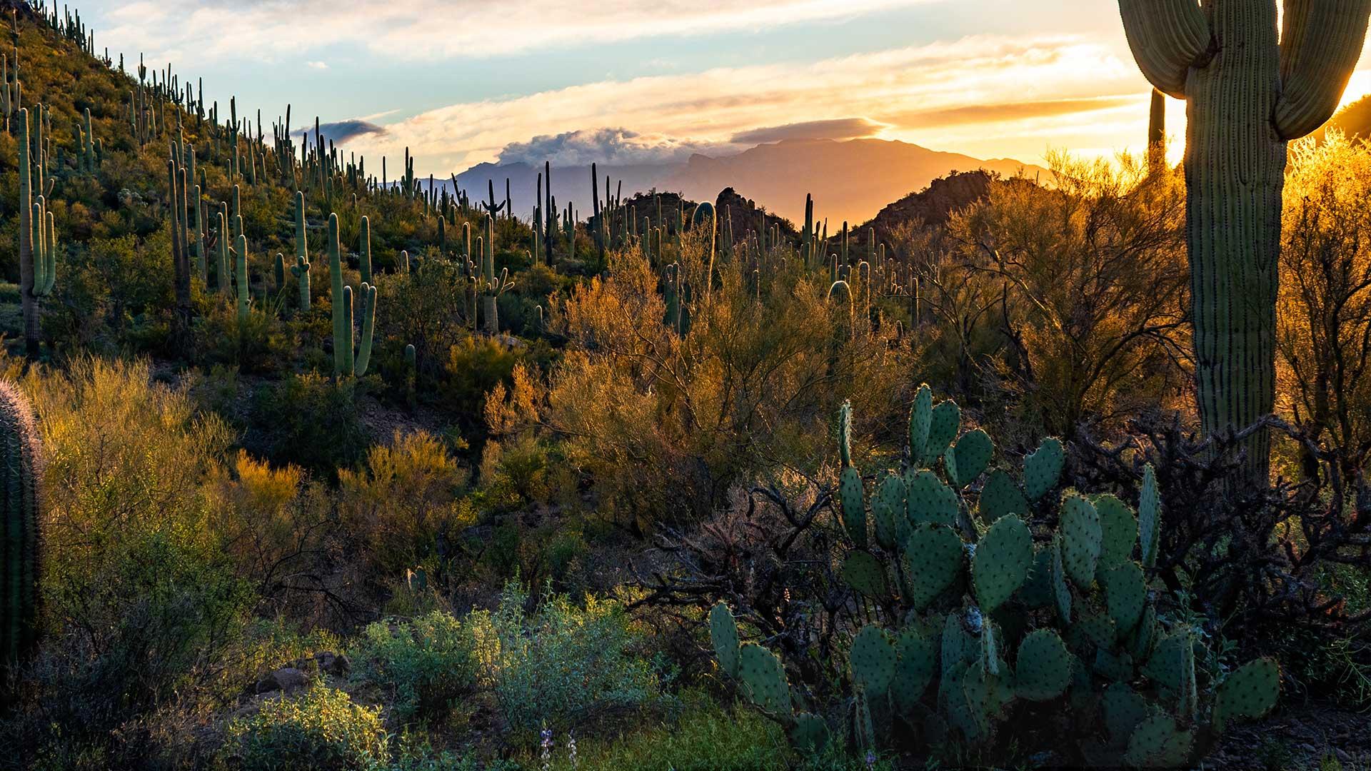 A beautiful desert landscape at sunset